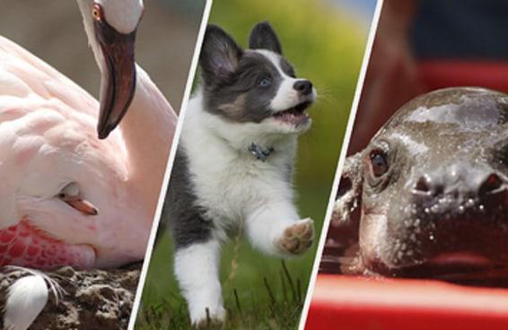 Escolha esses animais fofinhos e diremos seu animal espiritual