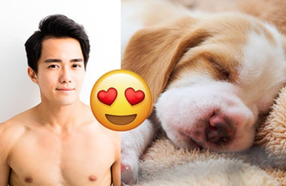 Monte um namorado e diremos qual cachorrinho você poderia ter (no lugar dele)