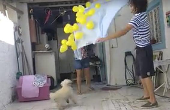 Esta cachorra fez aniversário e ganhou o melhor presente possível
