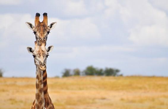 12 animais selvagens em poses feitas para você dar risada