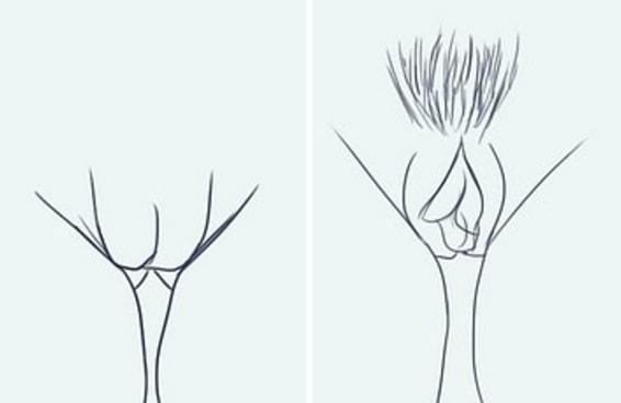 Como você trata sua vagina?