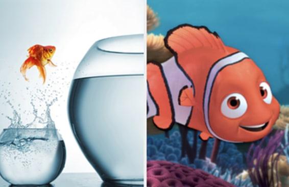Que tipo de peixe você é?