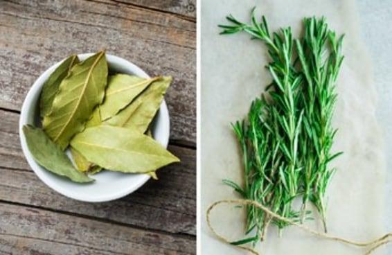Você consegue identificar estas 12 ervas e temperos?
