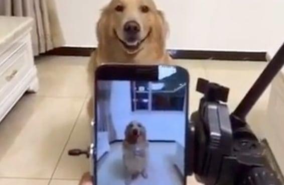Este cachorro sorrindo para a câmera é o que você precisava para alegrar seu dia