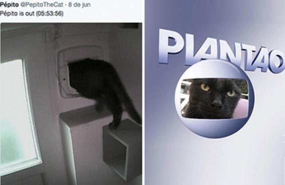O sumiço do gato Pépito mobilizou muita gente no Twitter