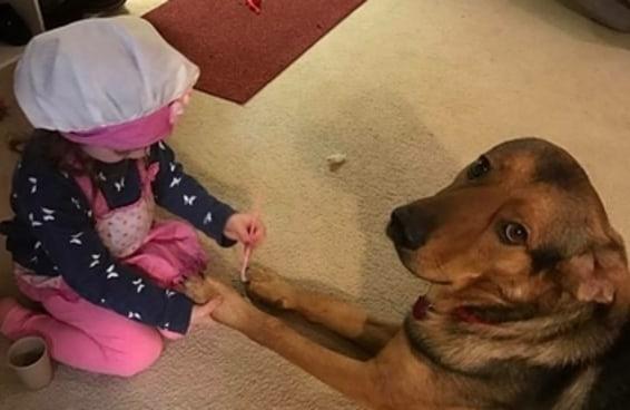 23 motivos pelos quais toda criança deveria crescer ao lado de um cachorro
