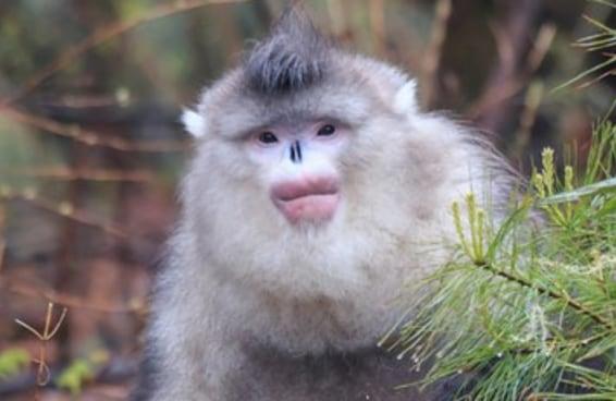Eu estou obcecada por esse macaco que aparentemente fez harmonização facial