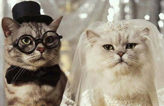 31 coisas que você pensa num casamento