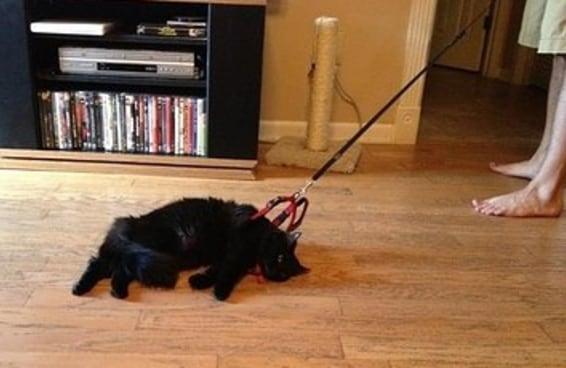 19 gatos que não aguentam mais os humanos
