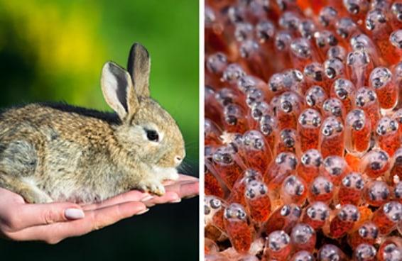 10 fatos assustadores sobre animais bonitinhos que vão arruinar o seu conceito de fofura