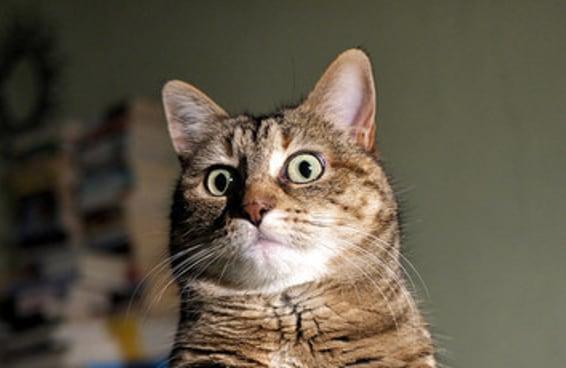 11 fotos de gatos que traduzem perfeitamente sua relação com dinheiro