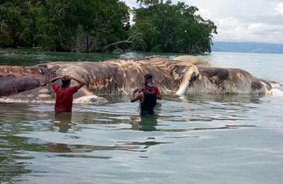O que seria esse monstro marinho aterrorizante que encalhou em uma praia da Indonésia?