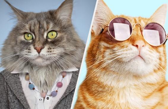 Só quem é um gato disfarçado de humano vai marcar pelo menos 10 neste teste