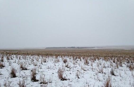 Esta foto de 500 ovelhas em um campo nevado vai bagunçar sua cabeça