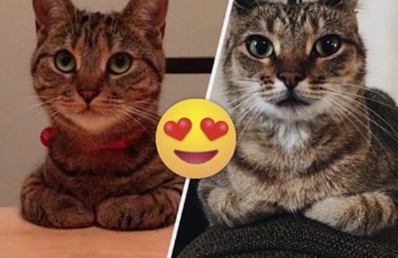 21 fotos de gatinhos fazendo aquela coisa fofa com as suas patinhas