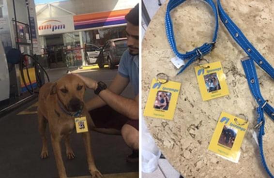 """Um posto de gasolina no RS """"contratou"""" três cachorros abandonados como seguranças"""