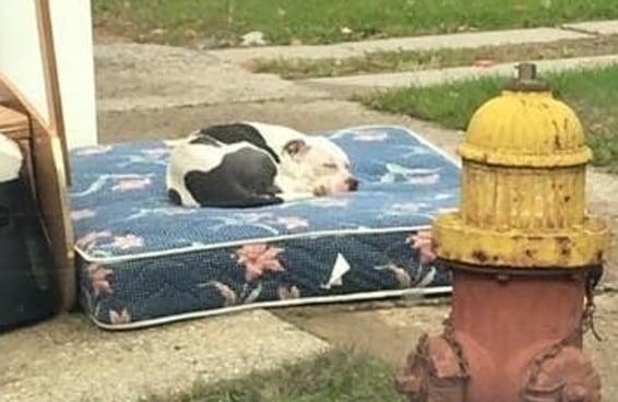 Este cãozinho abandonado ficou um mês esperando seus donos voltarem