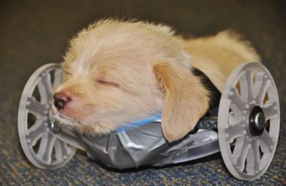 Cientistas fizeram uma cadeira de rodas numa impressora 3D para um cachorro com apenas duas pernas