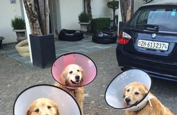 20 cães adoráveis que deixarão você com vontade de abraçar o seu melhor amigo