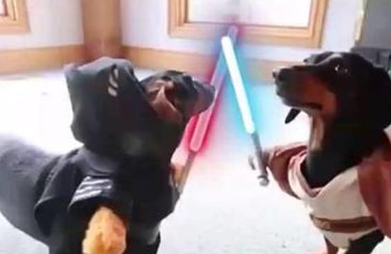 """18 vines hilários de """"Star Wars"""""""