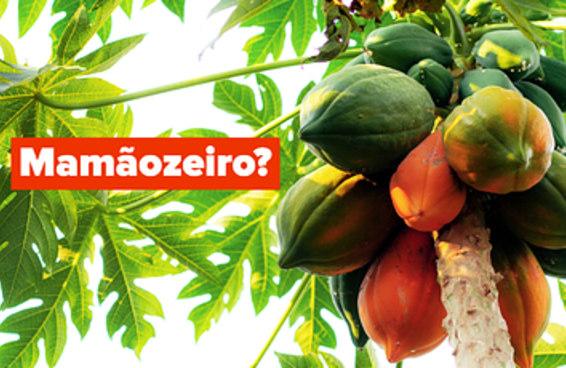 Você sabe os nomes destas árvores frutíferas?