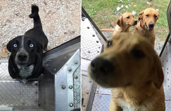 Alguns carteiros dos EUA criaram um grupo no Facebook para compartilhar fotos de cachorrinhos