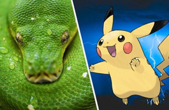 Suas escolhas do mundo animal te dirão que tipo de Pokémon mais combina com você