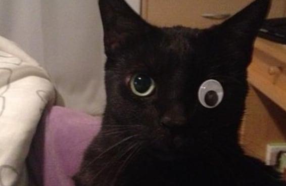 24 gatos que perceberam ter cometido um grande erro