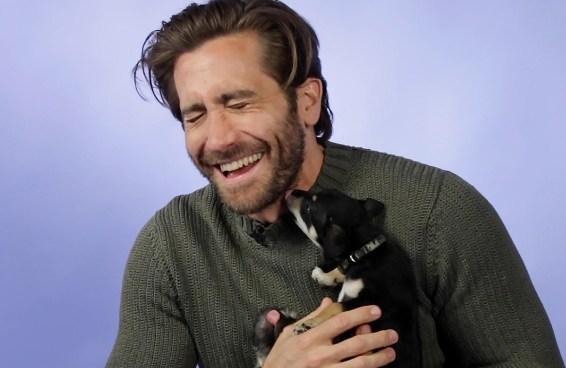 Jake Gyllenhaal responde perguntas dos fãs enquanto brinca com filhotes