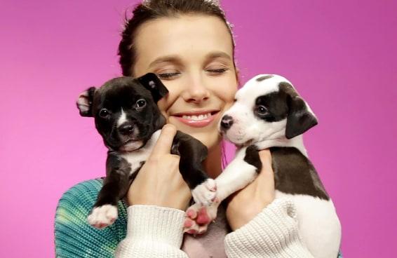 Millie Bobby Brown brinca com filhotinhos enquanto responde perguntas de fãs - BuzzFeed Brasil
