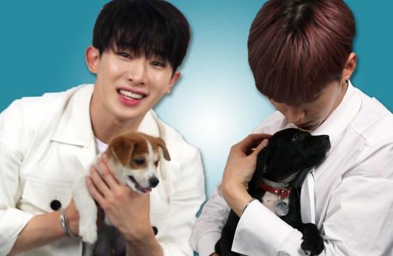 Monsta X brinca com cachorrinhos enquanto responde a perguntas dos fãs