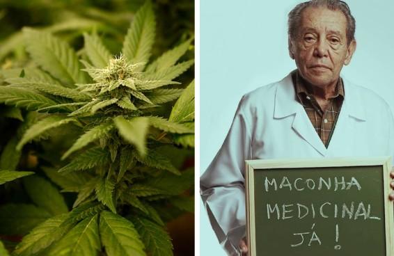 A ala bolsonarista está triste com o avanço do debate sobre cannabis medicinal na Câmara dos Deputados