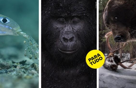 Estas são as melhores fotos sobre a vida selvagem de 2021