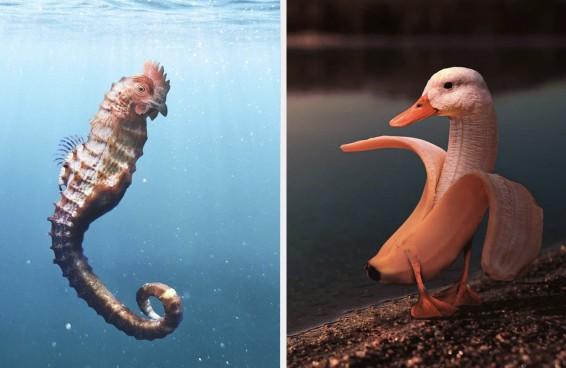 Este artista faz montagens com animais e os resultados são adoravelmente estranhos