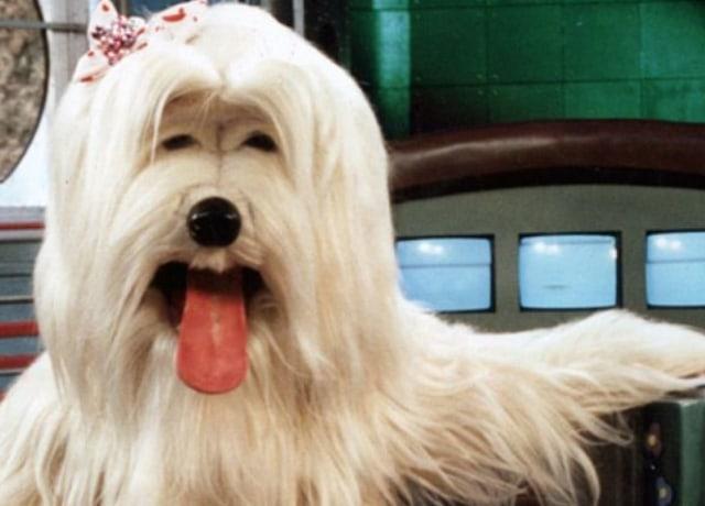Priscila, uma cachorra gigante, do programa TV Colosso