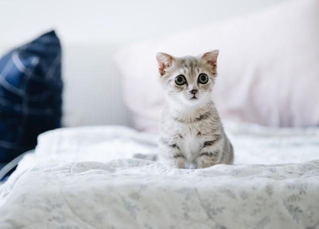 gatinho assustado