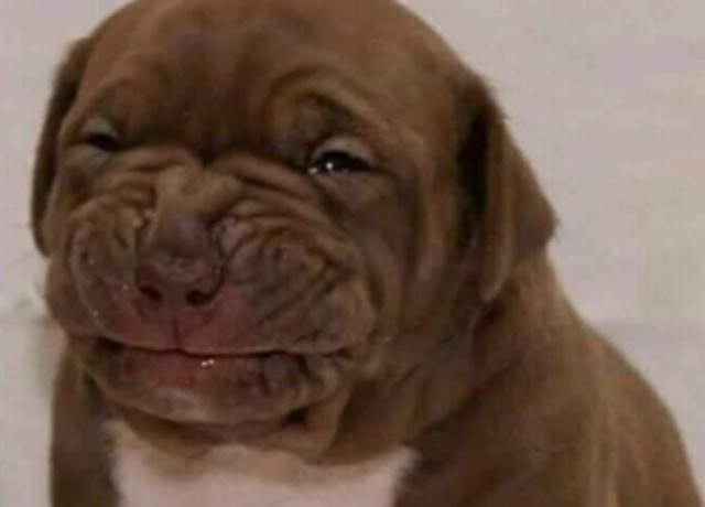 """Cachorrinho com cara de """"ai meu deus, num quero"""""""