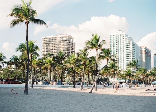 palm trees near buildings