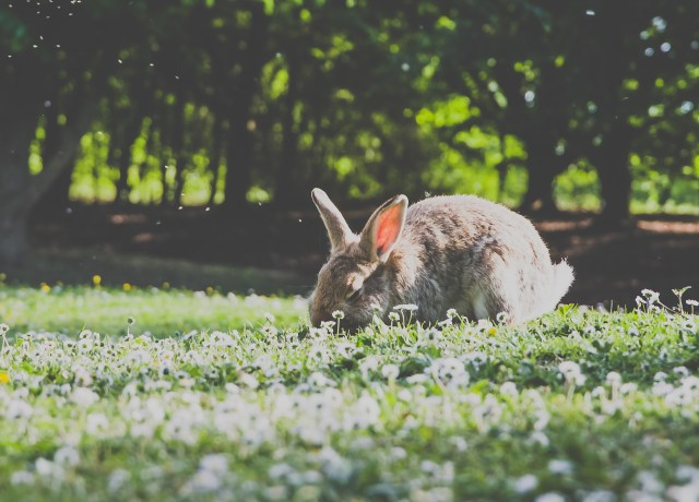 low angle photography of brown rabbit