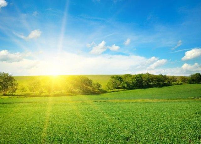 Um gramado iluminado pela luz do sol.