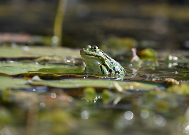 green frog on water during daytime