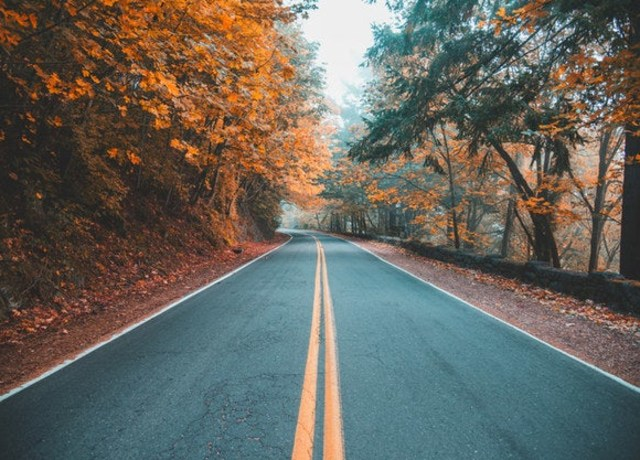 Uma estrada com árvores alaranjadas.