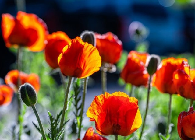 Flores nascendo em um campo.