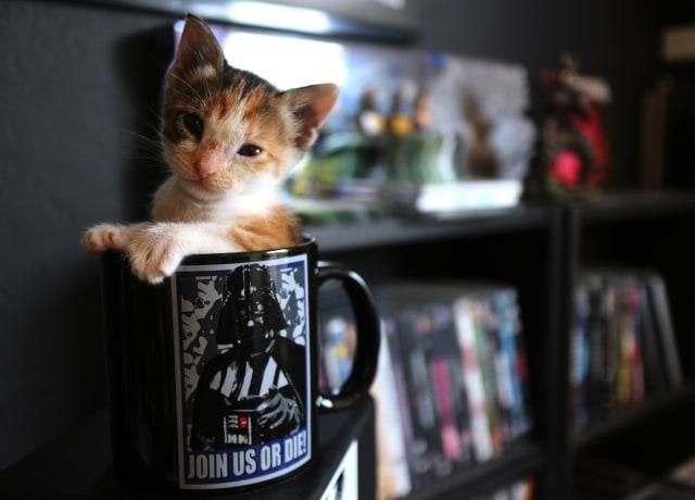white and orange kitten inside black mug