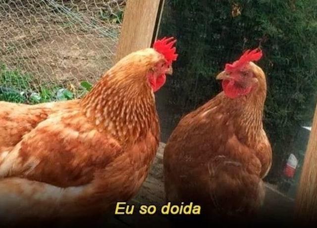 """Foto de uma galinha marrom se olhando no espelho, com a legenda """"Eu so doida"""" embaixo dela."""