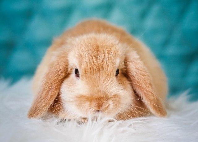 brown rabbit on white textile