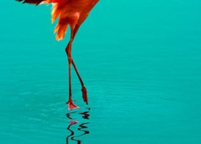Foto das pernas de um pássaro, em cima da água.