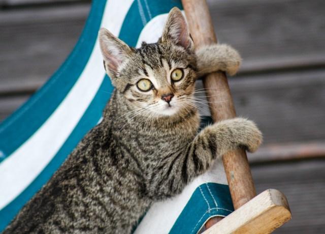 cat lying down on chair