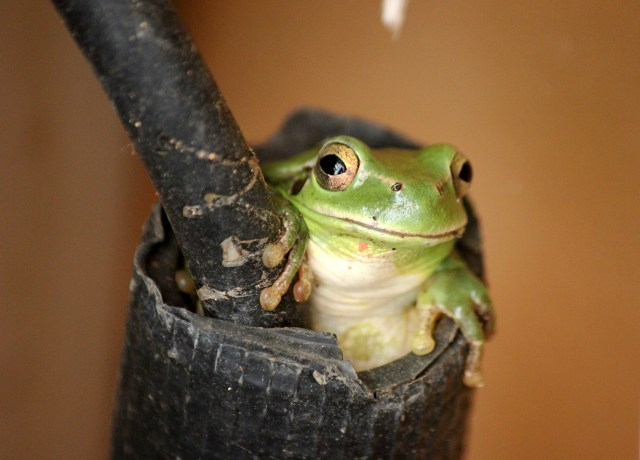 green frog on black leather textile