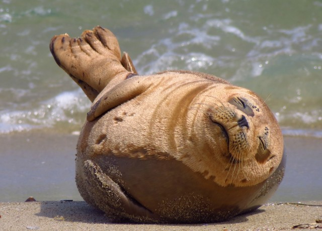 brown seal on body of water during daytime